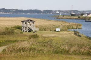 『『「妙岐ノ鼻」浮島地区2』の画像』の画像
