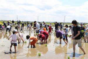 『田植祭』の画像