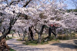 『興禅寺』の画像