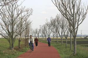 新利根川桜づつみ遊歩道