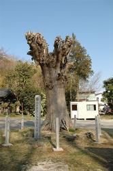 『大念寺03』の画像